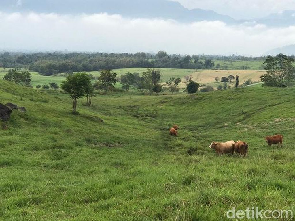 Foto: New Zealand ala Sumatera Barat