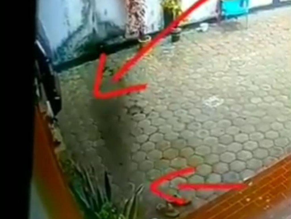 CCTV Babi Ngepet Hebohkan Meulaboh