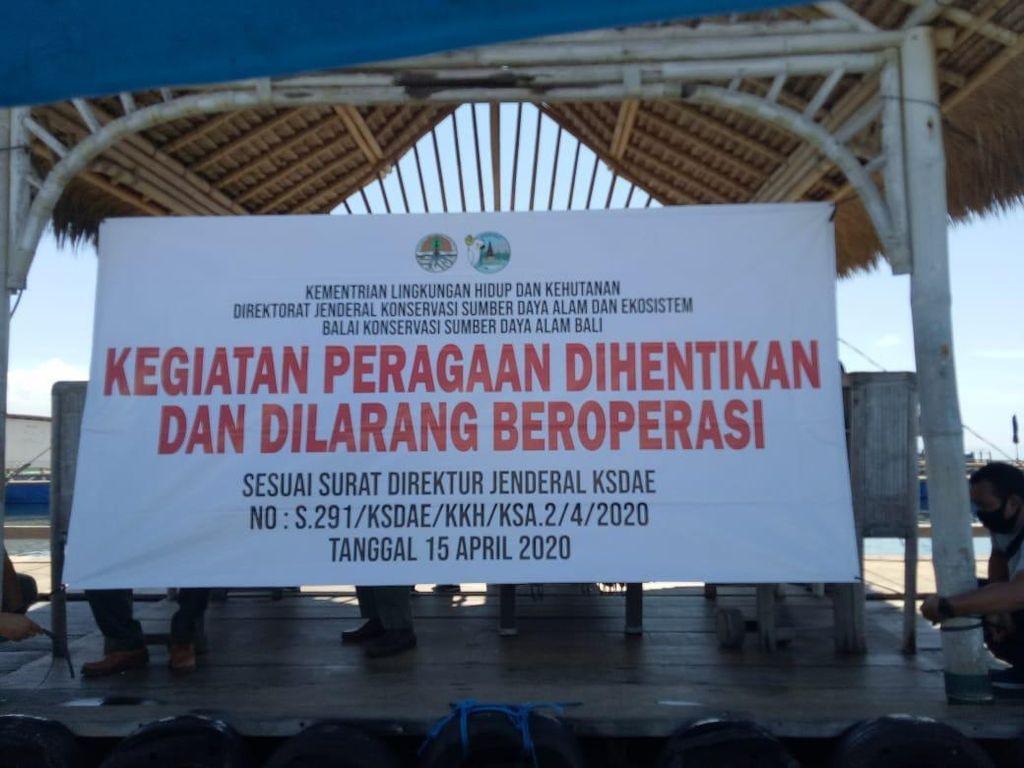 Lokasi Lucinta Luna Tunggangi Lumba-lumba di Bali Tak Berizin