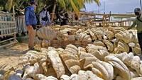 Ada Cangkang Kerang Raksasa Senilai Rp 364 Miliar! Disita Filipina