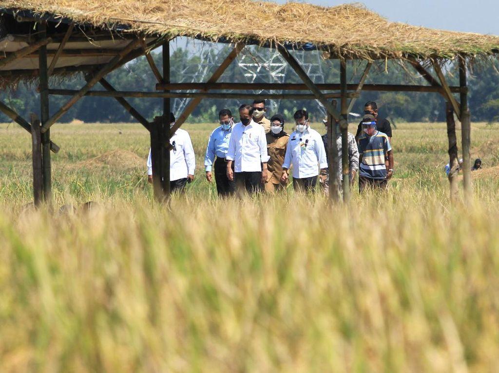 BPS Sebut Pertanian Jadi Sektor Andalan di Triwulan I 2021