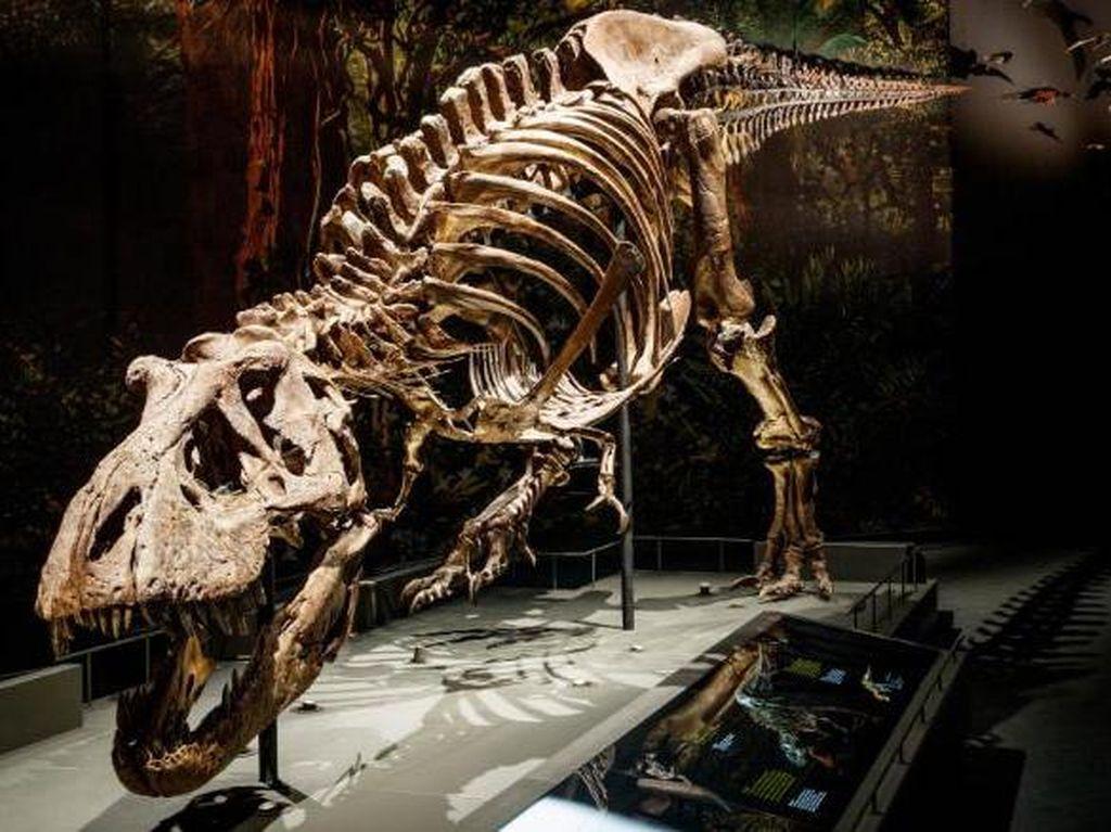 Studi Terbaru: Ternyata T-Rex Jalannya Lambat