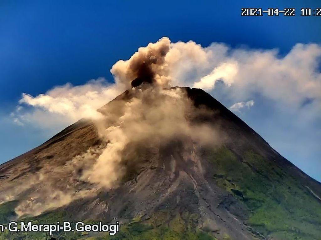 Gunung Merapi Erupsi Siang Ini, Awan Panas Meluncur 1,5 Km