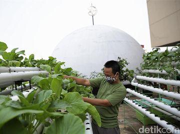 Saat Atap Masjid di Ibu Kota Disulap Jadi Kebun Hidroponik