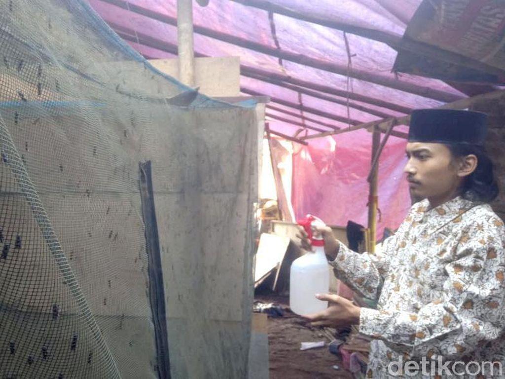 Budidaya Maggot, Ponpes di Cirebon Ini Sukses Jaga Lingkungan-Wirausaha