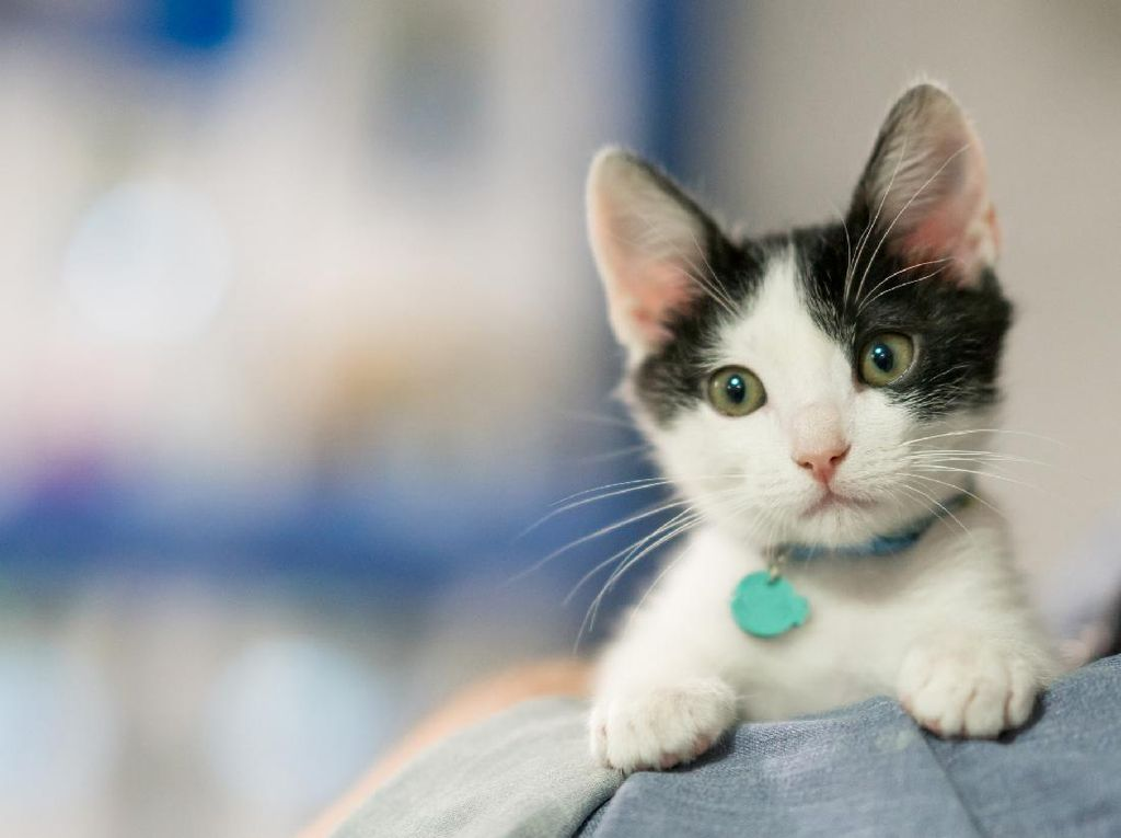Hilang dari Rumah, Kucing Ini Malah Ikut Mendaki Gunung