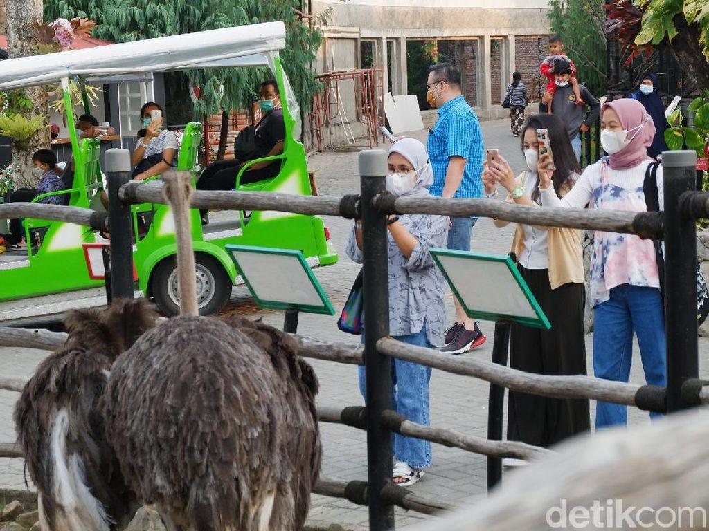 Asyiknya Ngabuburit di Lembang Park and Zoo, Pengunjung: Terasa Eksklusif