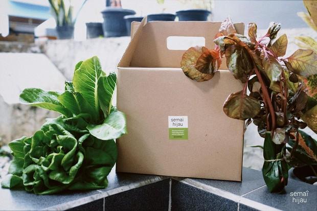 Hampers sayuran