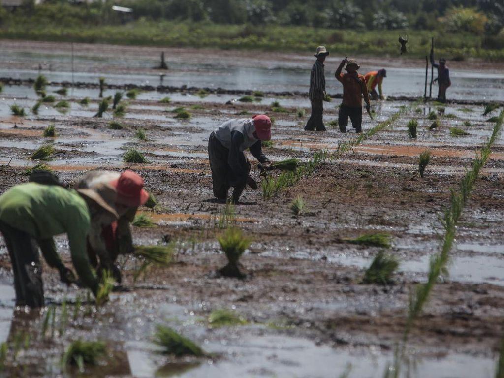 Masalah di Laut China Selatan Dinilai Bisa Ancam Ketahanan Pangan RI