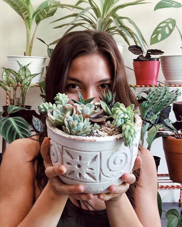 Succulent mini garden