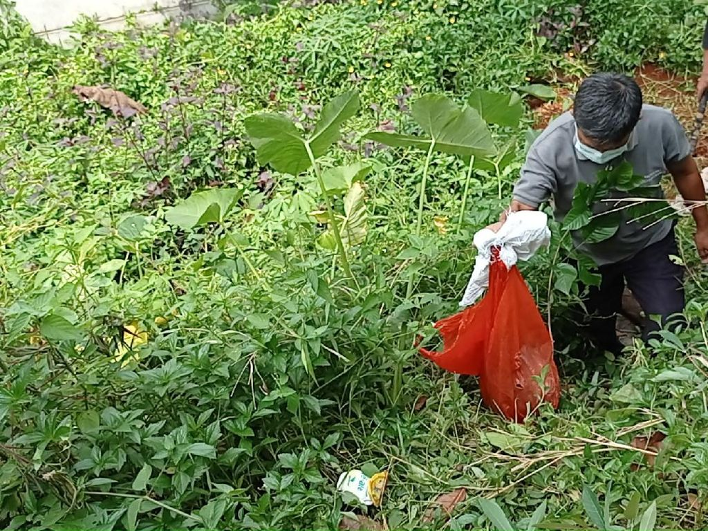 Polisi Bongkar Kuburan Babi Ngepet di Depok
