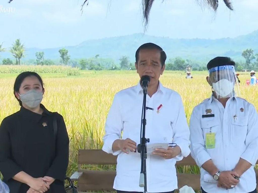 Tinjau Panen Padi di Malang, Jokowi Puji Varietas Unggul IPB-3S
