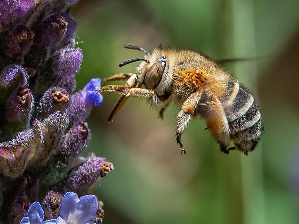 Hii.. Ngeri! Pria di AS Tewas Disengat Ribuan Lebah