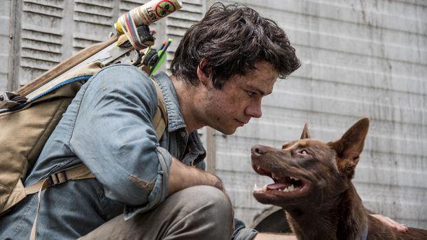 Joel (Dylan O'Brien) dan Boy dalam film Love and Monsters.dok. Netflix.