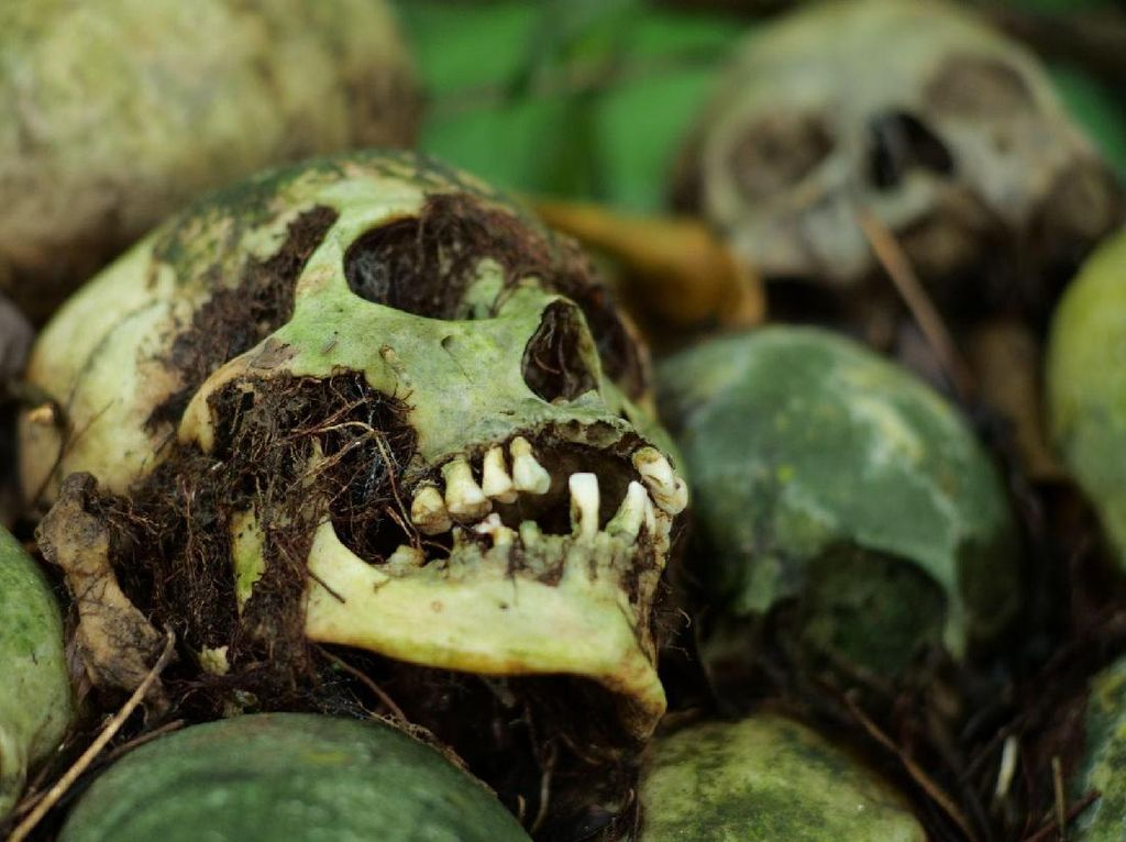Desa Trunyan dan Tradisi Sakral Kematian yang Masih Lestari