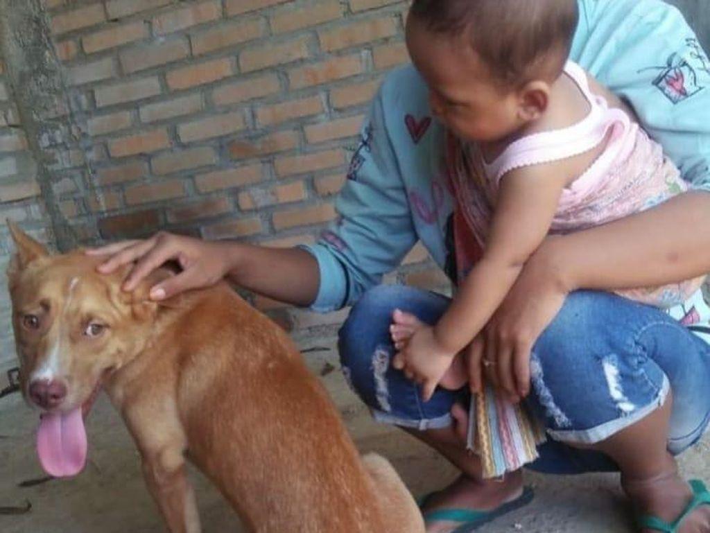 Pembantaian Belasan Anjing di Pacitan Dilakukan Enam Orang