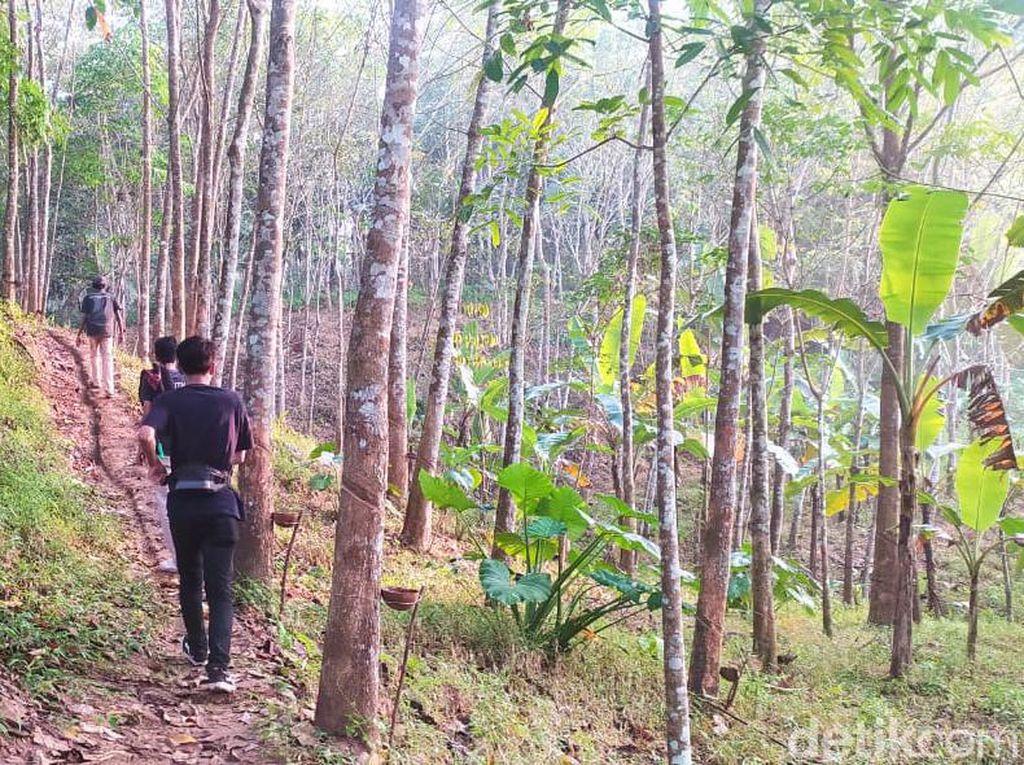 Menyusuri Jalan Hutan yang Dilintasi Ibu Hamil Ditandu di Pandeglang