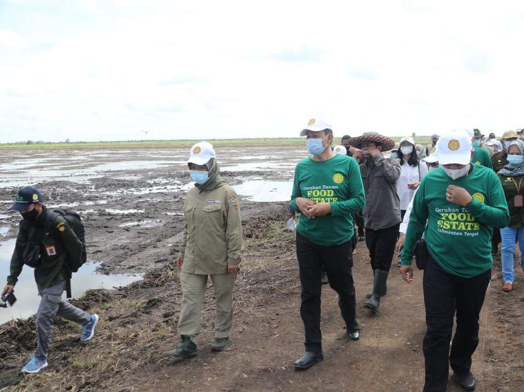 Kementan: Kalimantan Tengah Akan Jadi Kiblat Food Estate Nasional