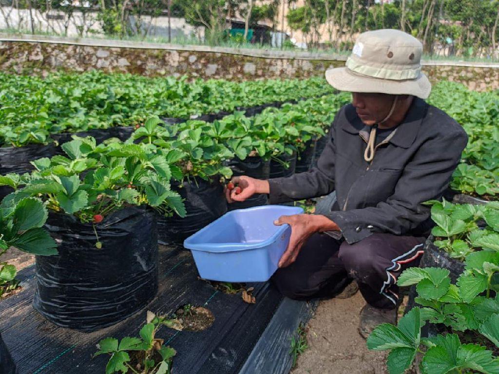 Pertamina Beri Modal Usaha dan Pelatihan untuk 37 Petani di Jabar
