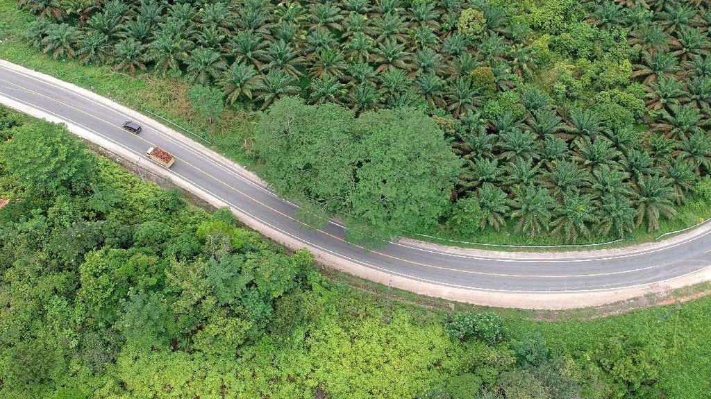 Hening dan Lengang di Jalinsum Jambi-Riau