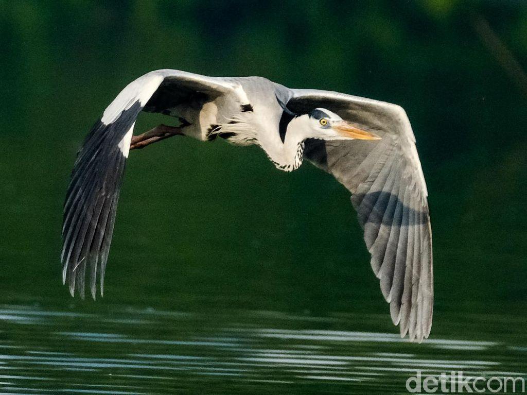 Potret Hari Migrasi Burung Sedunia di Perairan Jakarta