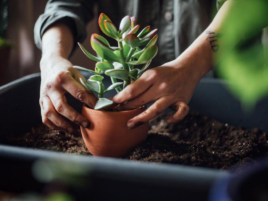 7 Tanaman Hias yang Cocok Diletakkan di Meja Belajar