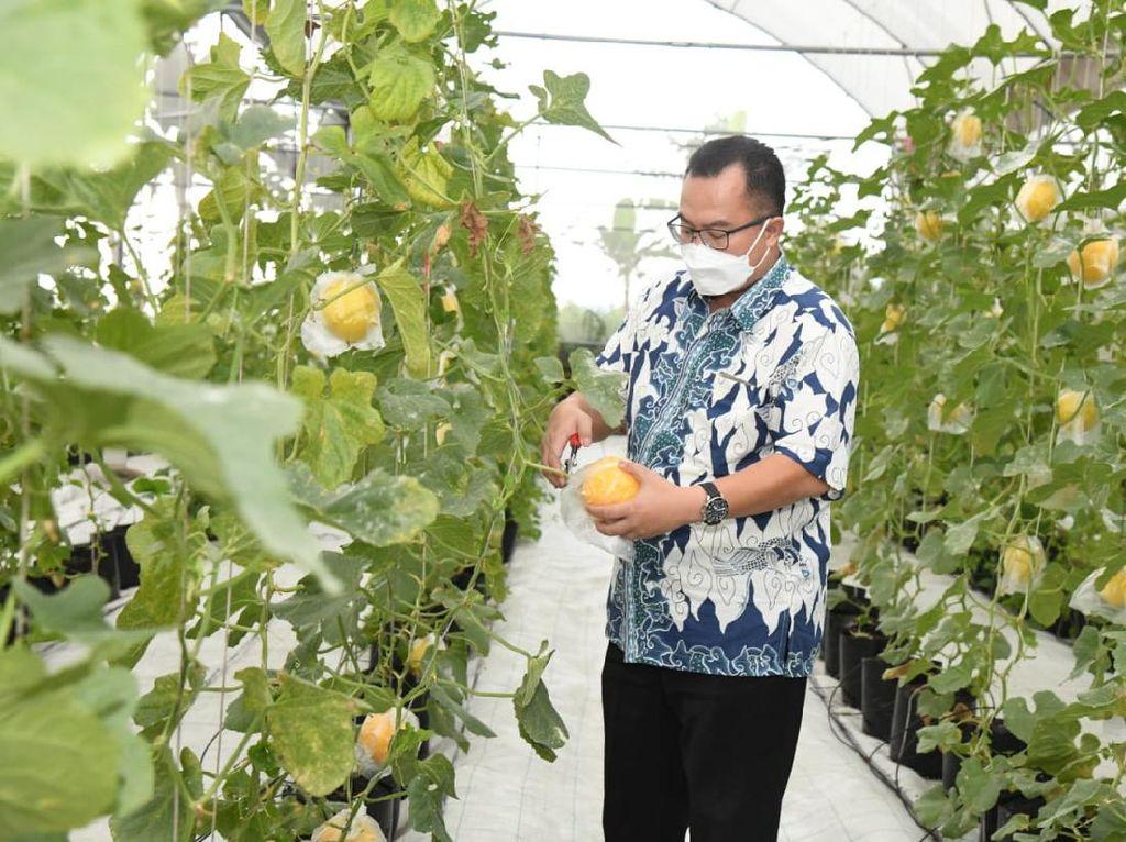 IPB Sediakan Lahan 40 Hektare untuk Mahasiswa Latihan Bertani