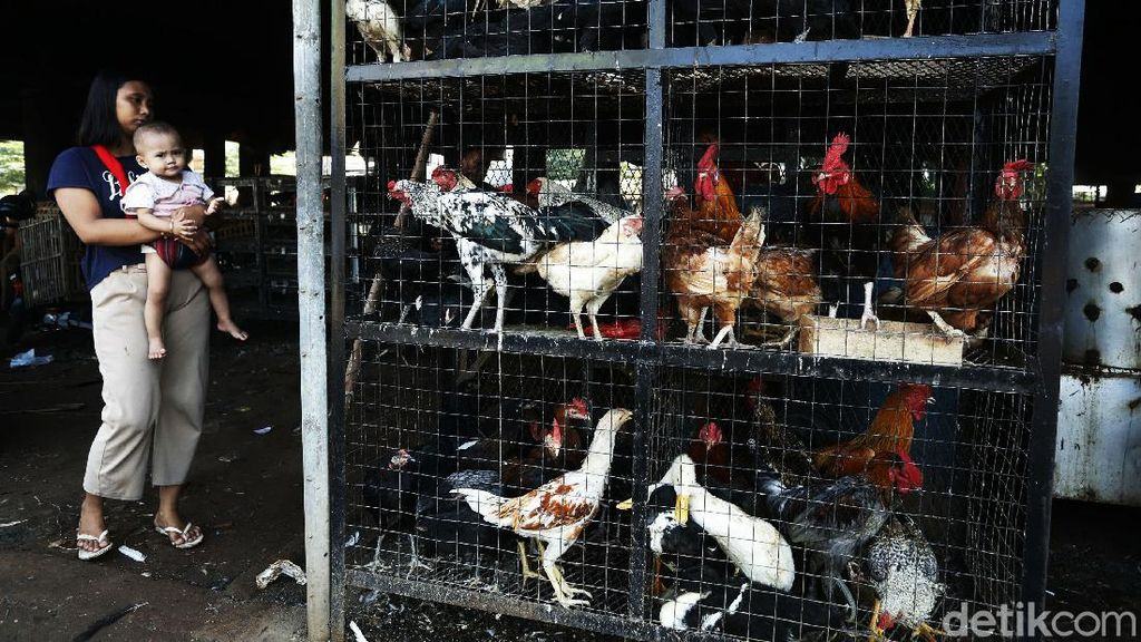 Warga Berburu Ayam dan Entok Jelang Lebaran
