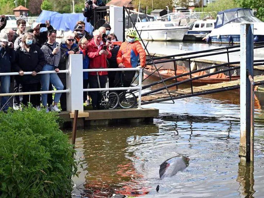 Bayi Paus yang Terdampar di Sungai Thames di London Berhasil Diselamatkan