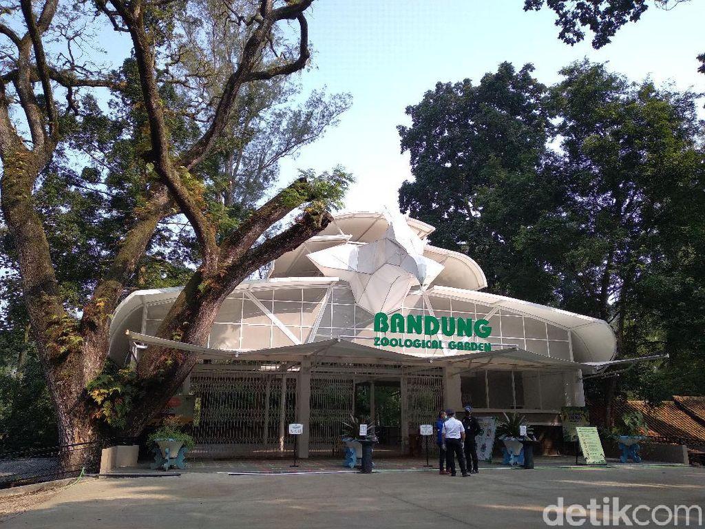 Sepinya Bandung Zoo Dihantam Pandemi, Gaji Karyawan Dipangkas