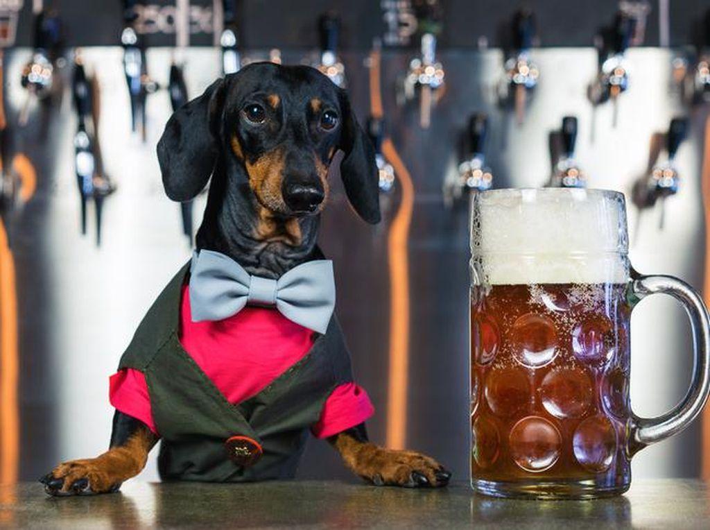 Perusahaan Ini Mencari Anjing Pencicip Bir dengan Bayaran Rp 283 Juta!