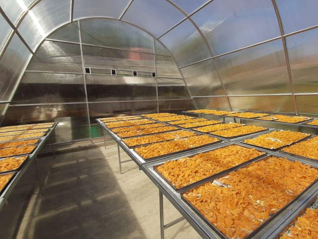 Solar Dryer Dome Bantu Petani Tingkatkan Kualitas Produk Hortikultura