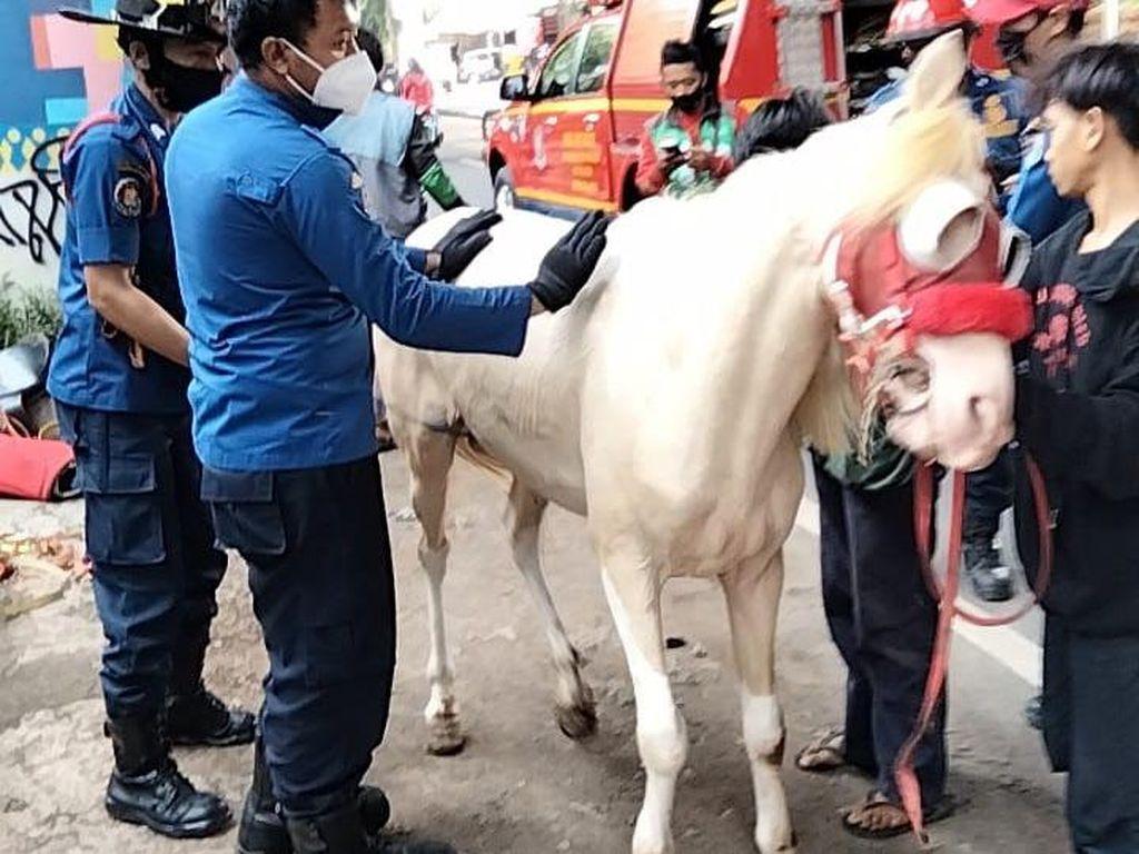 Kuda Putih Jeblos di Selokan di Jaksel, Berhasil Dievakuasi