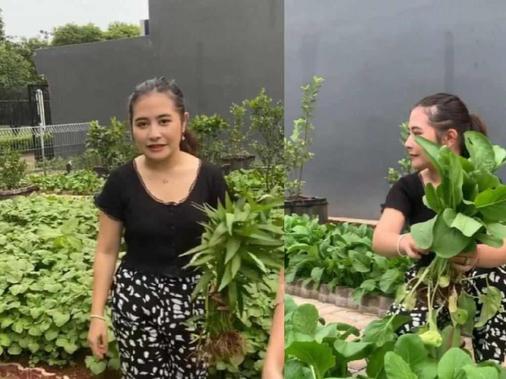 Prilly Latuconsina Punya Kebun Sayur Organik di Rumah, Tanam Apa Saja?