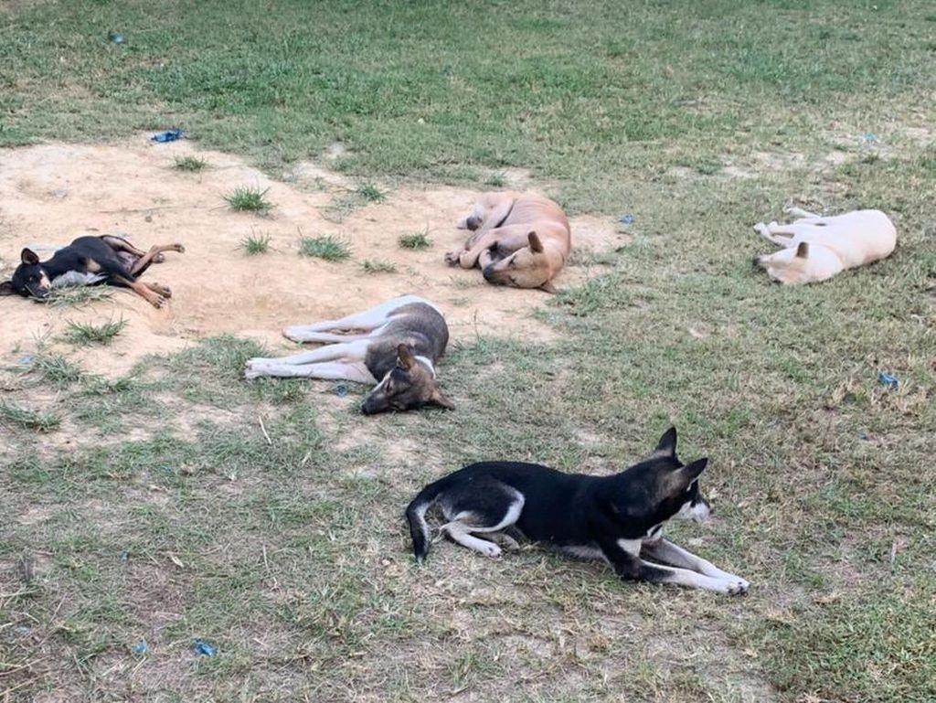 Mengenaskan! Begini Kondisi Puluhan Anjing Saat Disita di Kulon Progo