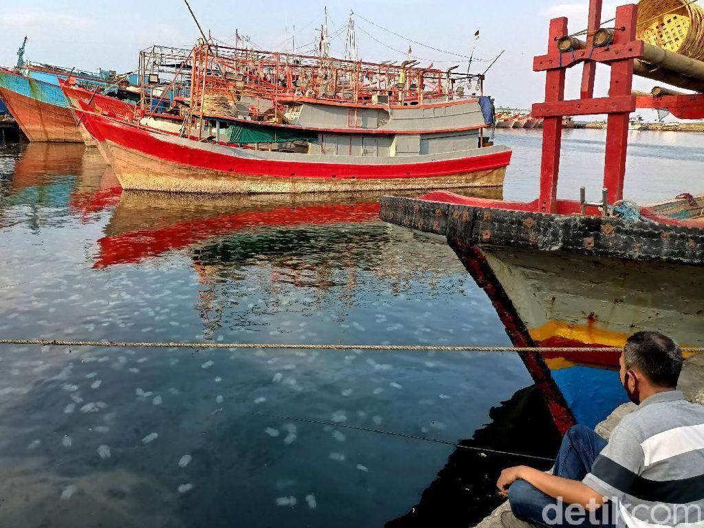 Penampakaan Jutaan Ubur-ubur yang Serbu Pantai Mayangan Probolinggo