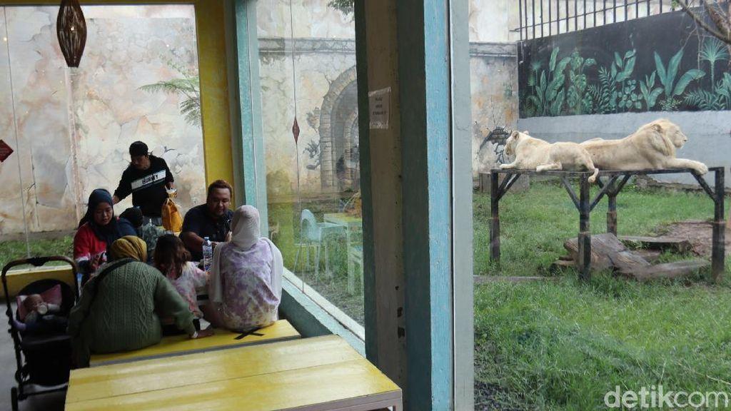 Serunya Sensasi Makan Ditemani Harimau dan Singa