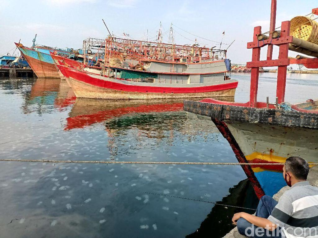 Jutaan Ubur-ubur Invasi Pantai Mayangan Kota Probolinggo