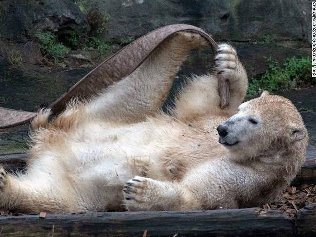 Beruang Liar Ini Ditembak Mati Setelah Menyerang Warga di Jepang