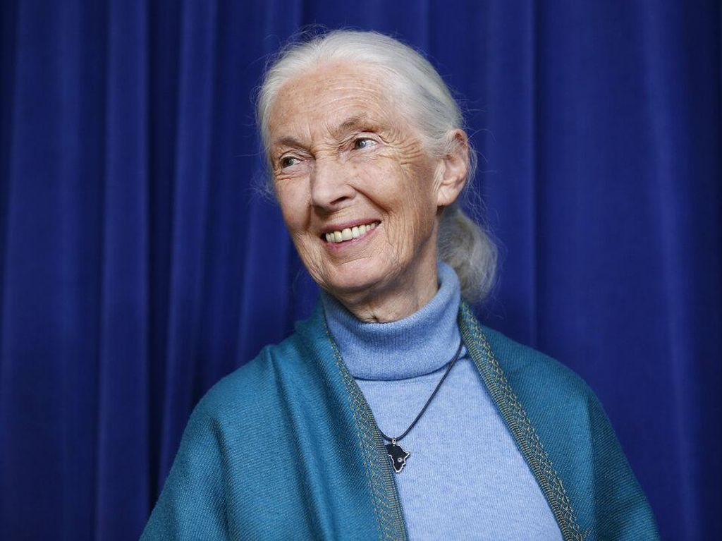 Peneliti Simpanse Jane Goodall Raih Penghargaan Templeton