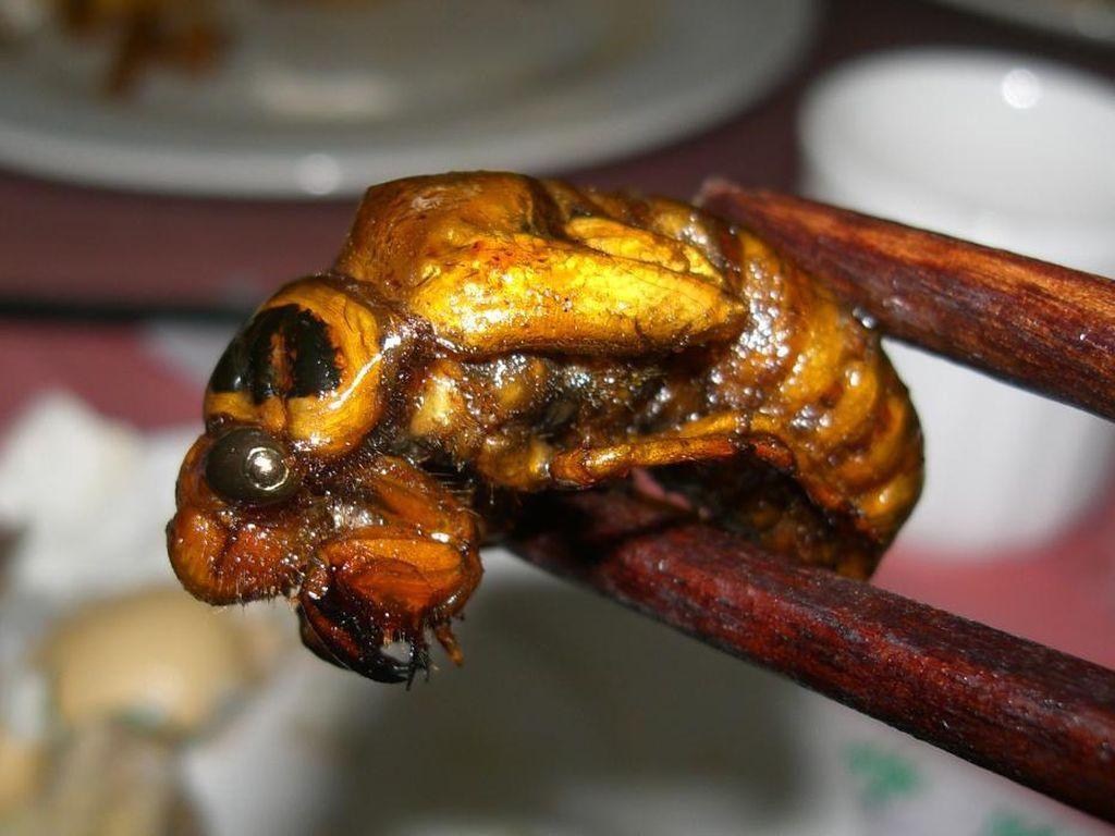 Lebih Enak dari Udang, Serangga Cicada Bakal Jadi Makanan Populer Masa Depan