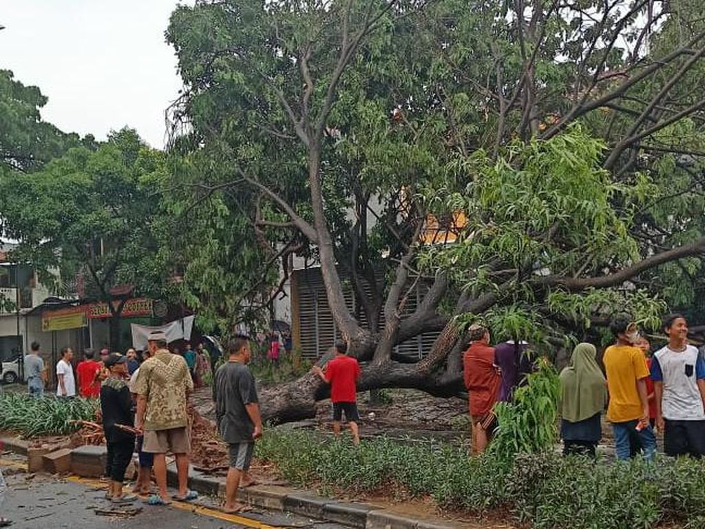 Angin Kencang Jadi Sebab Pohon-pohon Tumbang di Jl Juanda Depok