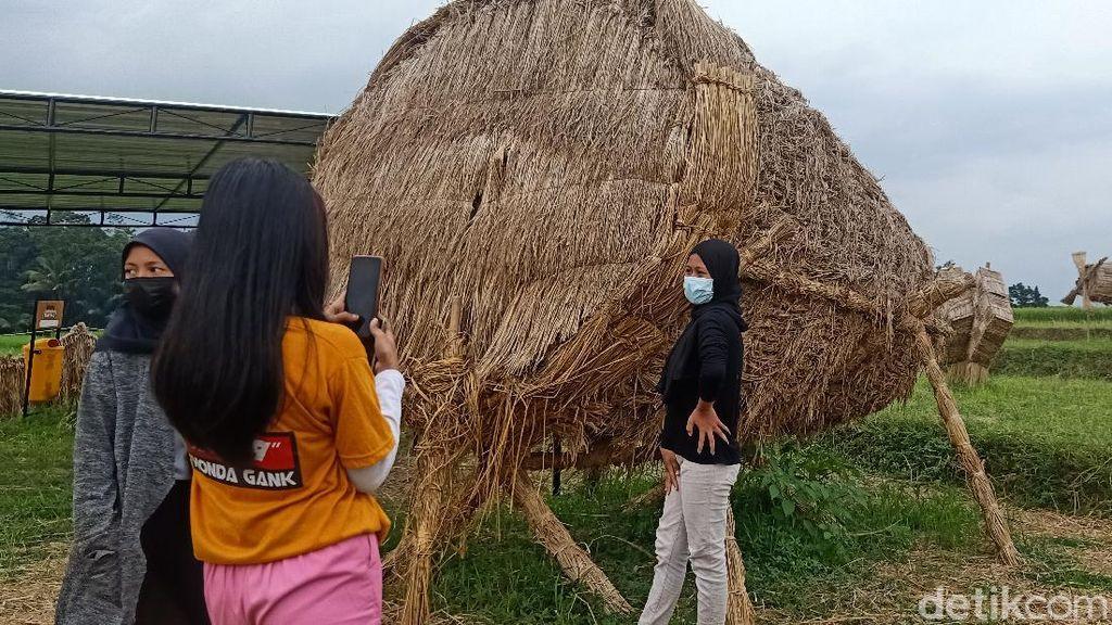 Foto: Saat Jerami Sisa Panen Jadi Karya Seni
