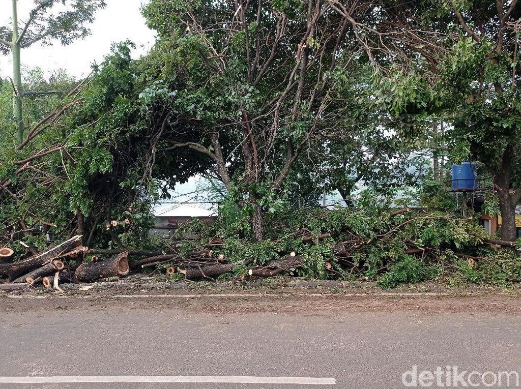 Sisa Pohon Tumbang di Juanda Depok Belum Diangkut, Ditaruh di Trotoar