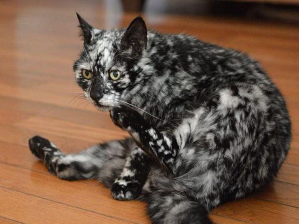 Aneka Foto Hewan Aneh dengan Kondisi Vitiligo, Apa Itu?