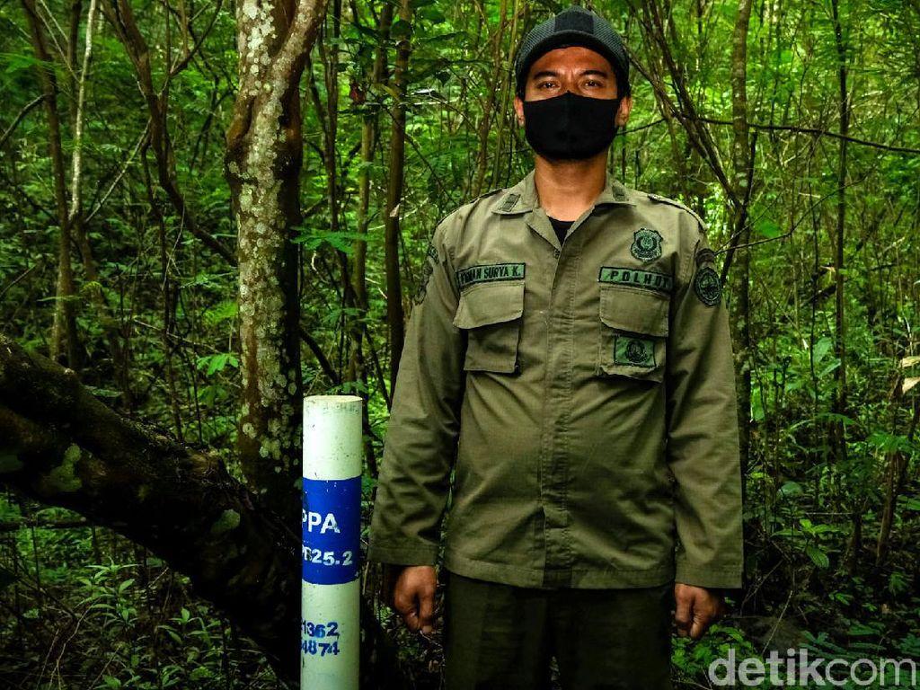 Mengenal Profesi Polisi Hutan, Sang Penegak Keadilan di Alam Rimba