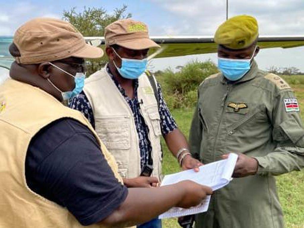 Libur Pandemi, Kenya Sensus Satwa Liar Gede-gedean