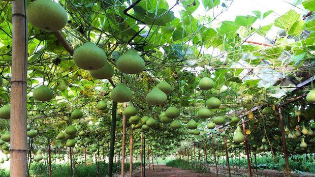 Hyotan lamp merupakan lampu asal Jepang yang terbuat dari labu jenis gourd. Kulit gourd sudah dikeringkan dilubangi membentuk suatu pola digunakan sebagai penutup lampu sehigga pendar cahaya lampu membentuk pola tersebut.