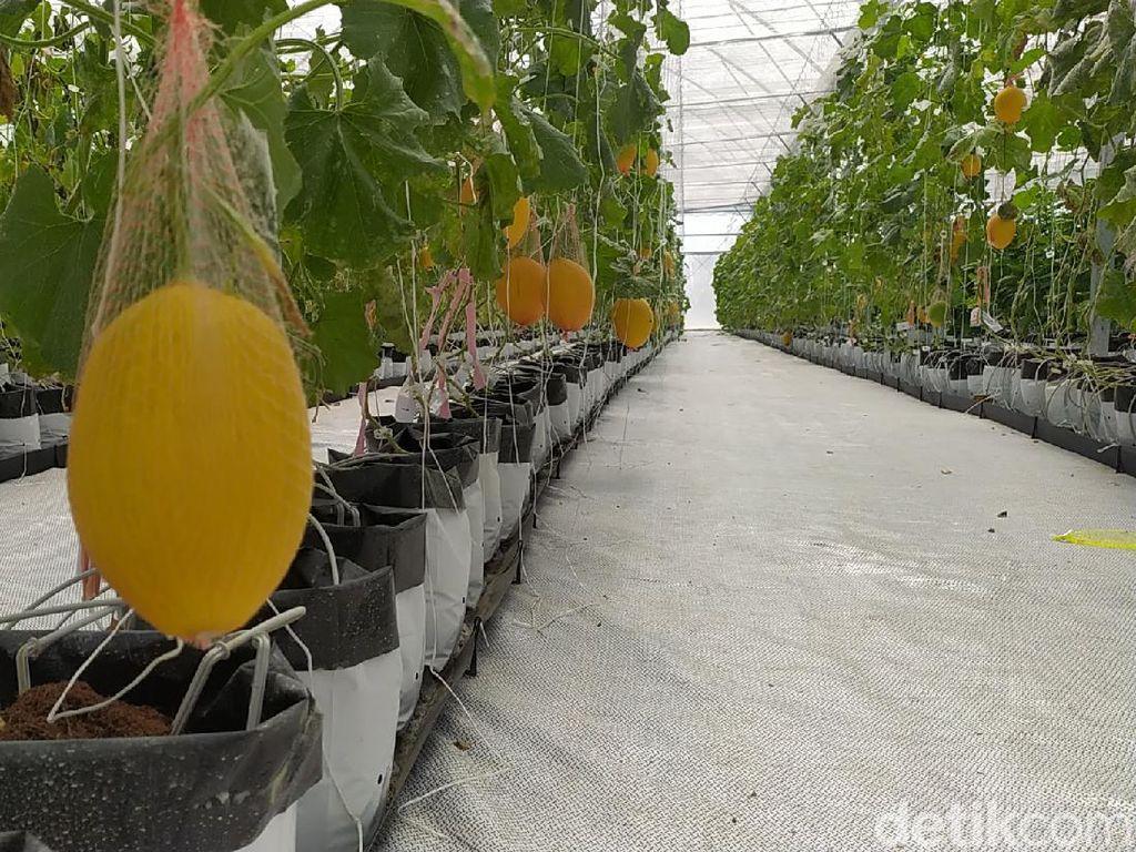 Di Sini lah Lahan Pertanian Teknologi Infus yang Diunggah Ridwan Kamil
