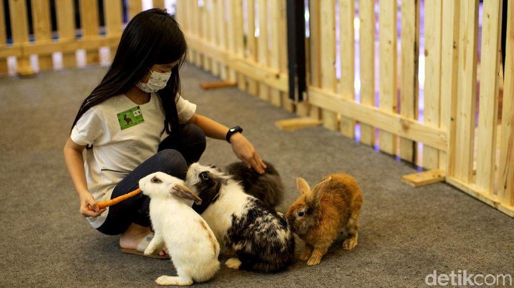 Asyiknya Bermain dengan Hewan di Pusat Perbelanjaan Ibu Kota
